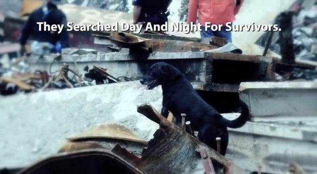 Hero Dog Rescued Final Person Trapped in 9/11 Rubble