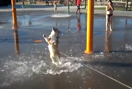 Dogs Who Love Water