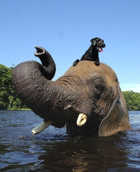 9.17.13 - Dog & Elephant1