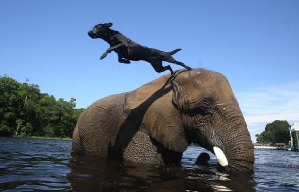 9.17.13 - Dog & Elephant2