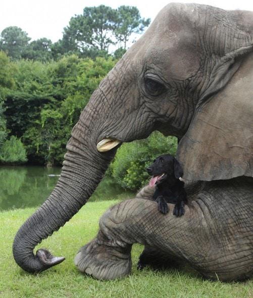 9.17.13 - Dog & Elephant3