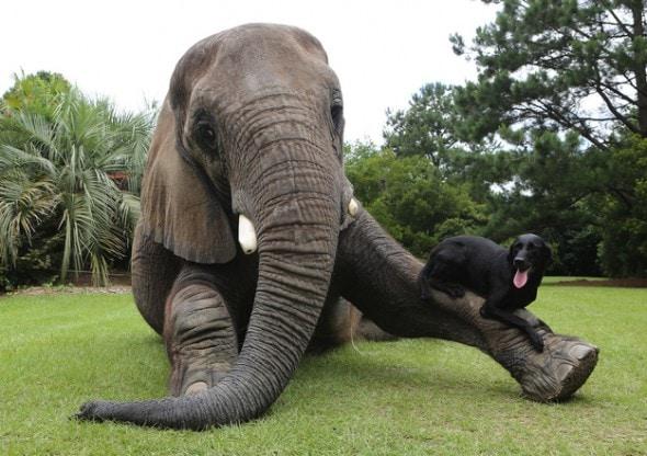 9.17.13 - Dog & Elephant4