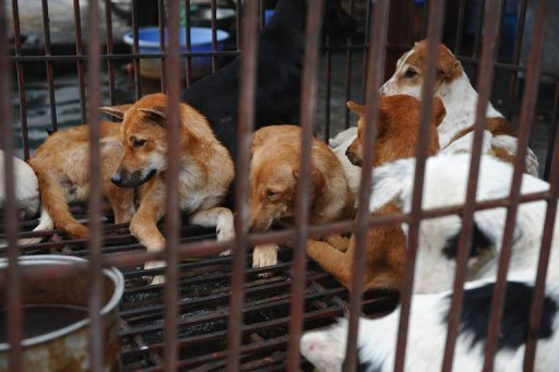 Hundreds of Vietnamese Admit to Lynching Dog-Snatchers
