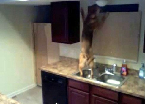 Dog Makes Daring Escape from Kitchen