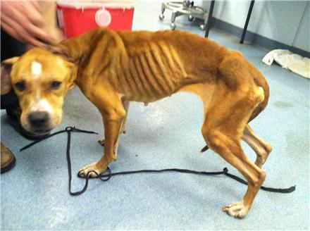 Animal abuse dogs starving