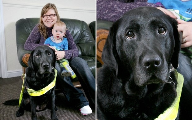 Guide Dog Pushes Baby Stroller out of Careening Car's Path