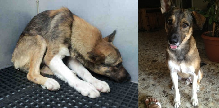 From Terrified to Treasured: A Shelter Dog's Amazing Transformation