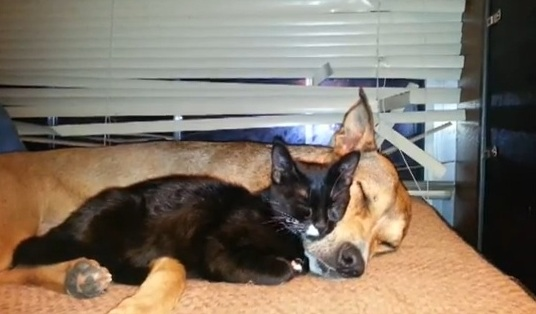 Rescued Kitten Gives Dog a Bath, Then They Nap