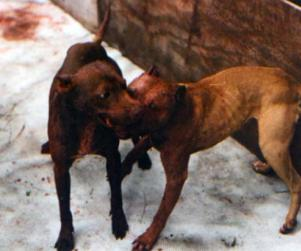 San Francisco Dog-Fighting Ring Busted