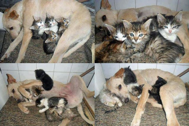 Rescued Dog Saves Box of Kittens from the Trash