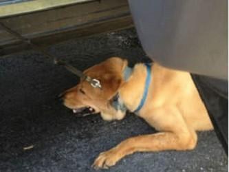 9.4.13 - SPCA Pres Jailed for Saving Dog