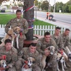 Afghanistan Vets Reunited with Dog & Puppies Born on Battlefield