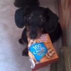 Cookie Thief Won't Give up the Goodies