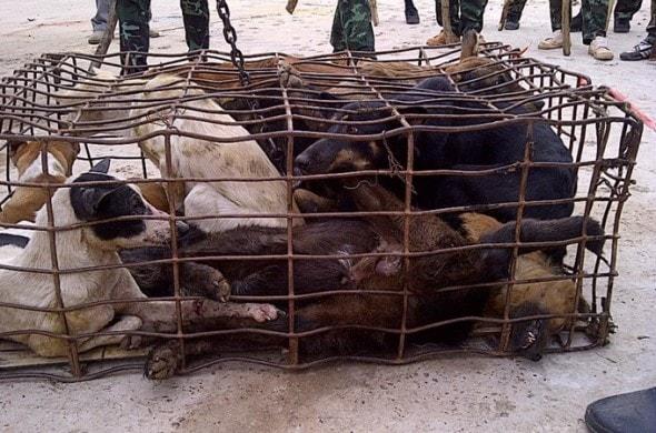 9.6.13 - Meat Trade Pledge