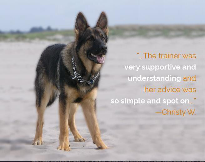 American Kennel Club Announces New Training Helpline