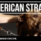 American-Strays-the-series-Season-2-The-FIX-BLCC-Dog-TITLE-CARD (2)