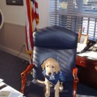 "Nominate Therapy Dog to be ""Pet Mayor"" of Toms River, New Jersey"