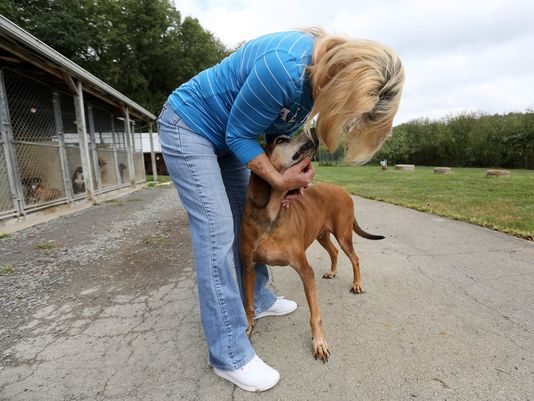 After Nine Years at a Shelter Dog Still Looking for Forever Home
