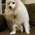 The Saturday Pet Blogger Hop: Dog Meets Hedgehog