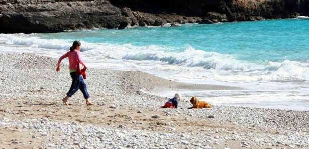 Hero Dog Saves Baby from Crawling into the Sea