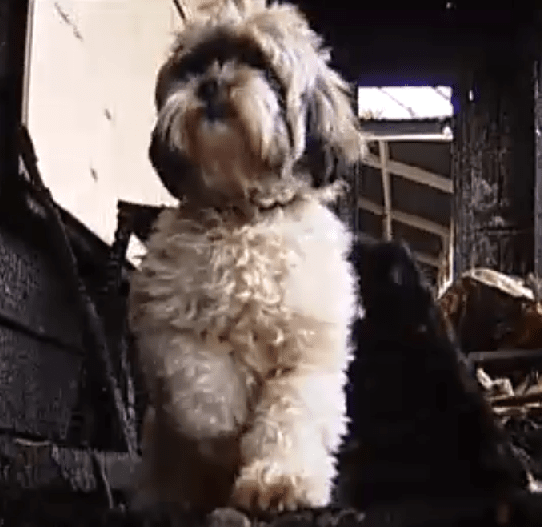 Dog Saves Family from Fire Just in Time