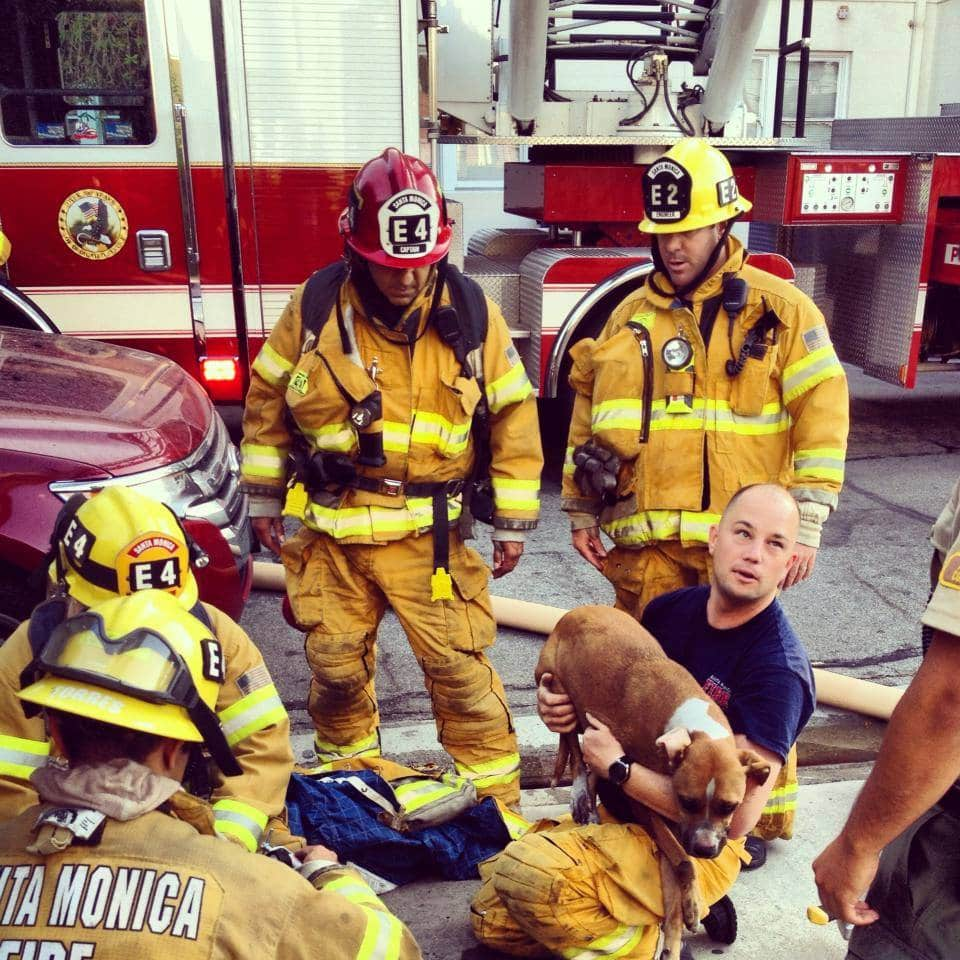Firefighters Revive Unconscious Dog Pulled from a Fire