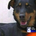 Good Samaritan Rescues Dog with Broken Leg on Freeway