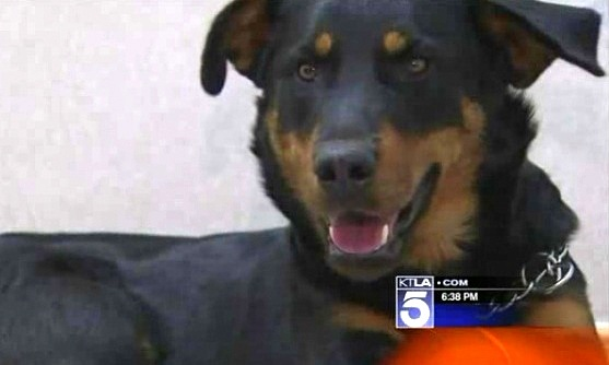 Good Samaritan Rescues Dog with Broken Leg on Freeway