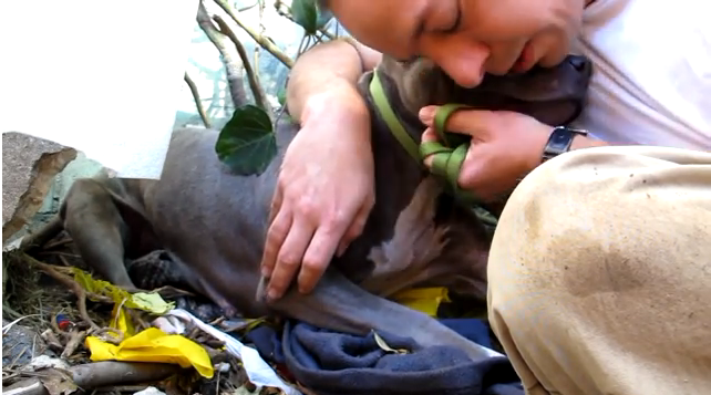 Nala: The Scared Pit Bull Rescued from a Ditch