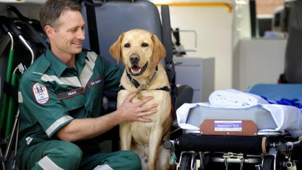 Paramedic Simon Cradock sits in his ambulance with Tango the guide dog.  Source: News Limited