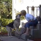 Loving Dog Saves Owner from Choking to Death