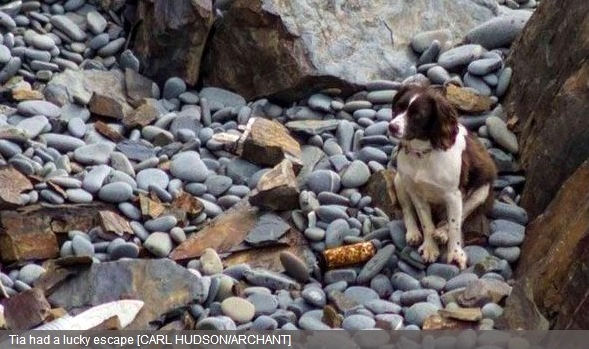 Miracle Dog Survives 100-Foot Tumble from Cliff