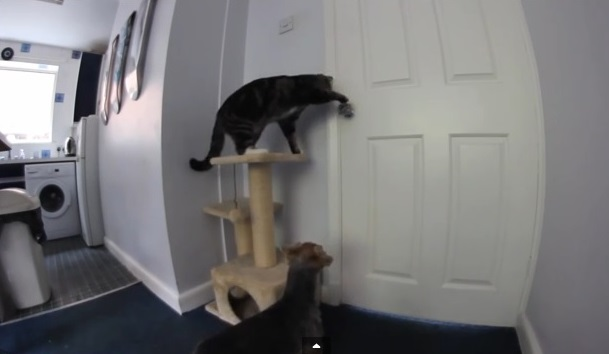 Clever Cat Helps Dog Escape