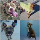 10.25.13 - Death Row Dogs17