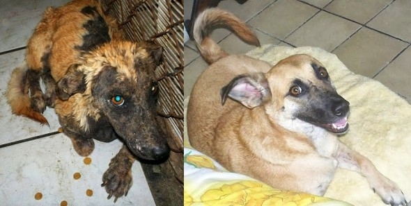 Dying Mexican Dog Gets the Rescue of a Lifetime - LIFE WITH DOGS