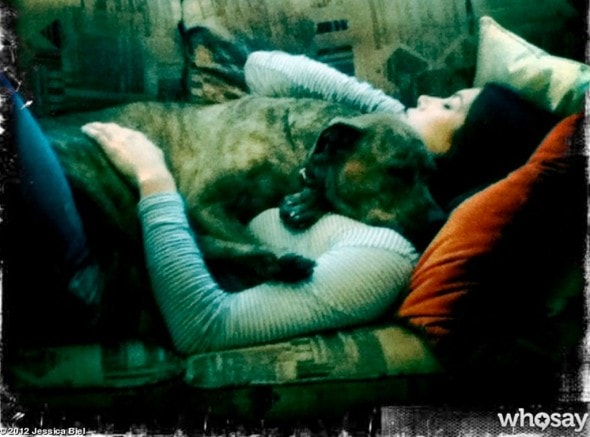10.26.13 - Celebs and Their Dogs - Jessica Biel & Tina - 55 lb blanket