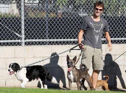 10.26.13 - Celebs and Their Dogs - True Blood Star Stephen Moyer - Splash (left) was ringbearer