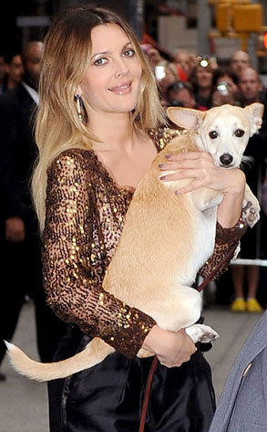 10.26.13 - Celebs and Their Dogs - adopted Douglas