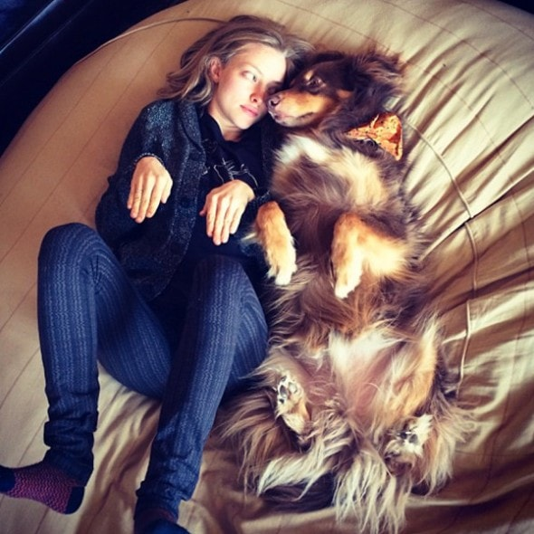 celebrities celebrate their dog love life with dogs