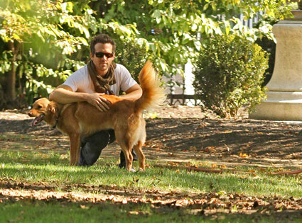 10.26.13 - Celebs and Their Dogs15 - Ryan Reynolds adopted dog Baxter