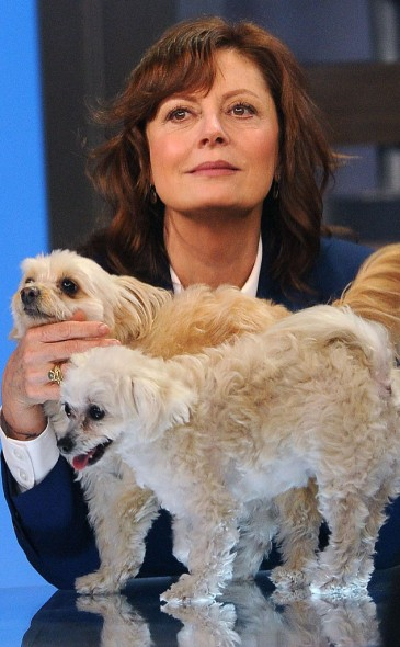 10.26.13 - Celebs and Their Dogs3