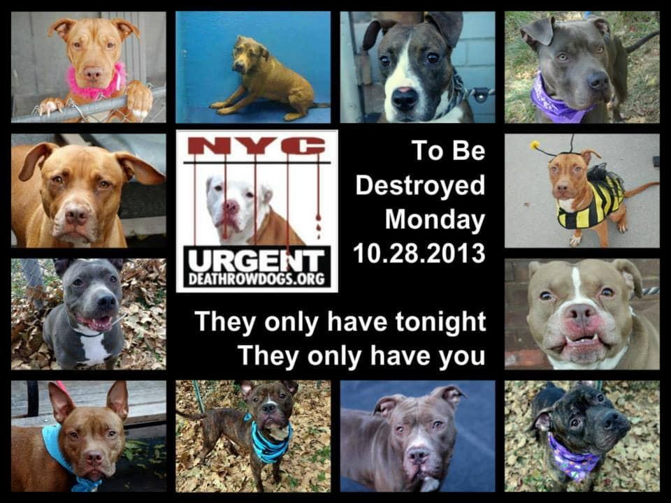 URGENT:  Death Row Dogs That Must Be Adopted Today