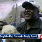 Missing Dog's Return Makes Best Anniversary Present Ever