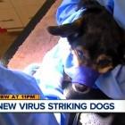 Deadly Ohio Dog Virus Hits Michigan