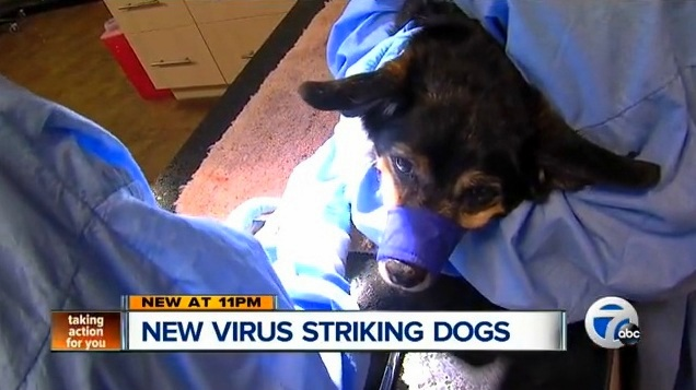 Deadly Ohio Dog Virus Hits Michigan