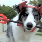 Dog Howl-o-ween Prank