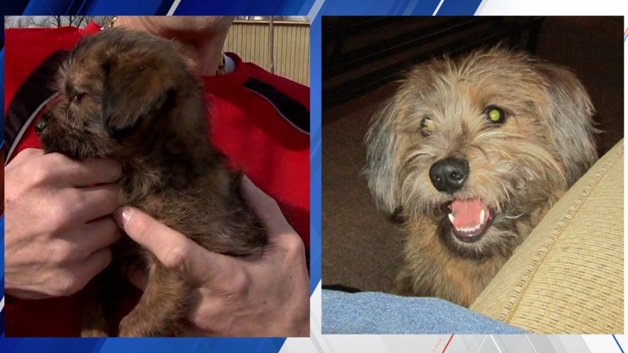 Puppy Thriving Eight Months After Being Rescued from Garbage