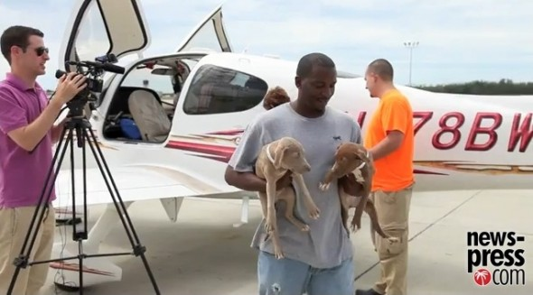 A volunteer helps bring some of the adorable puppies from the planes.