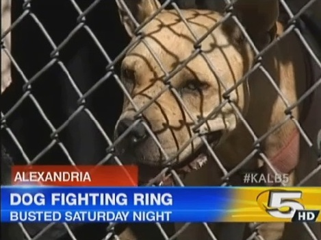 Multi-State Dog-Fighting Ring Busted