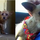 From Abandoned to Adored: The Rescue of a Petrified Dog